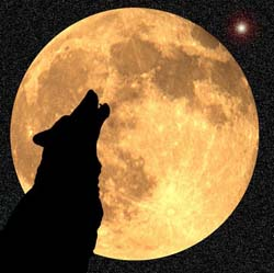 wolf-moon250